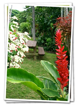 Photo of a red heliconia in our garden